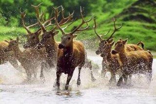 这些动物曾经只有18只,因为他爆红62个国家惊动联合国!