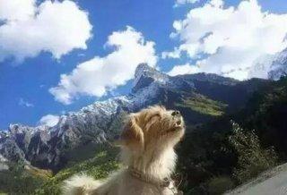 那只奔跑1700公里入藏的小狗,现在生活如何了?