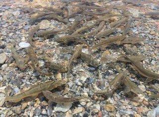 西藏的湖里鱼特别多,却为何无人敢钓?
