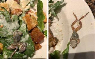沙拉中吃出一只死青蛙 店家还要求全额付款?!