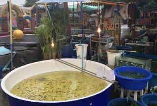 """泰国街头""""纸网捞鱼"""",两元一回,你猜捞到了啥?"""