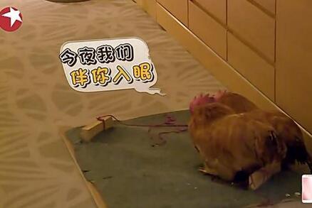 小绵羊:哥,你房间有鸡吗?红雷:鸡?放屁吧!