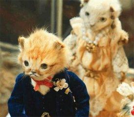 猫尸被艺术家做成玩偶 用这种东西布置的婚礼你还敢去吗?