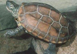 """千年王八万年龟,龟为何会如此""""长寿""""?"""