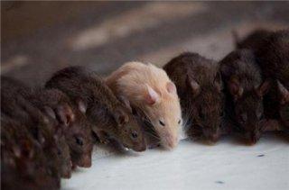 坑到你怀疑人生!这里的老鼠不能惹,踢一脚就要赔上黄金