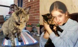 将成为世界吉尼斯最长寿的这只猫 你猜猜它已经多少岁了?