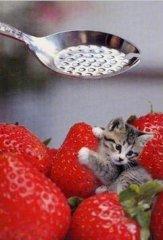 世界上最小的猫咪,勺子就能装下,你觉得是PS出来的吗?