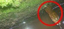 男子洞口发现大黄鳝看清后吓瘫