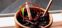 把铅笔埋进土里长出的东西傻眼