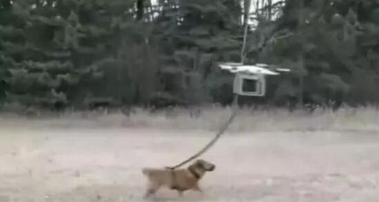 男子用无人机遛狗下一秒竟然…