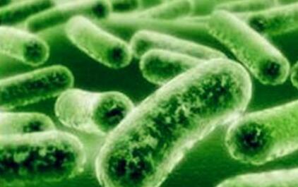 粪便菌群移植怎么进行监管比较好?