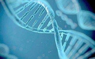 不要轻易尝试编辑自己的基因