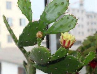 防辐射植物真的有效吗