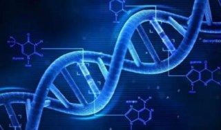 DNA可发生改变 母爱可能影响后代基因