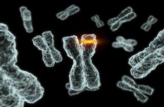 基因突变将会减少人们的睡眠时间