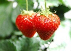 膽結石患者可以吃水果嗎?