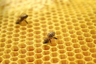 蜂胶的好处有哪些?