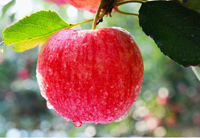 妈妈怀孕后期,吃什么水果?