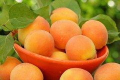 专家告诉你怀孕后期能吃杏子吗