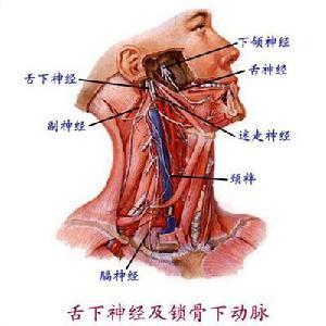 咀嚼肌痉挛舌肌麻痹