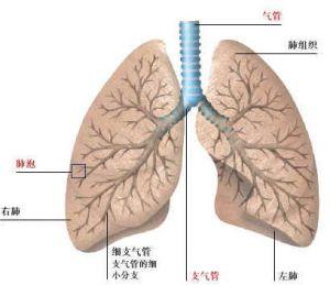体肺循环栓塞