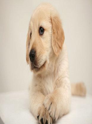 在诊断中怎样鉴别狂犬病
