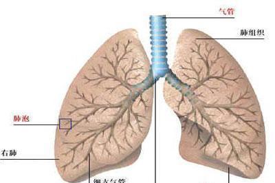 浅谈肺结核的症状