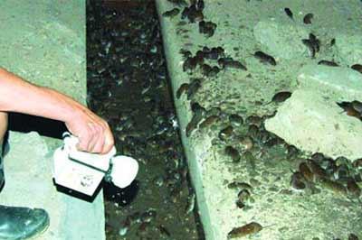 鼠疫我们应该怎么样有效的预防