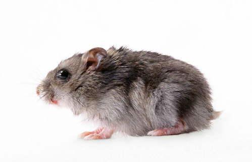 鼠疫的检查诊断方法有哪些