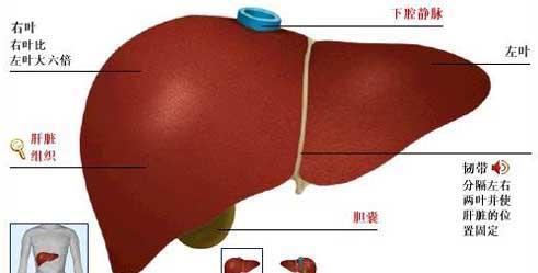肝肾综合征的治疗方法有哪些?