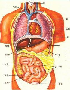 阿米巴肝脓肿吃什么好