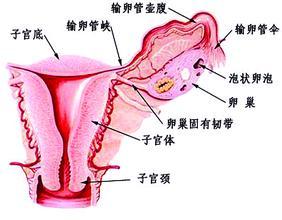 女性闭经是什么原因导致的呢
