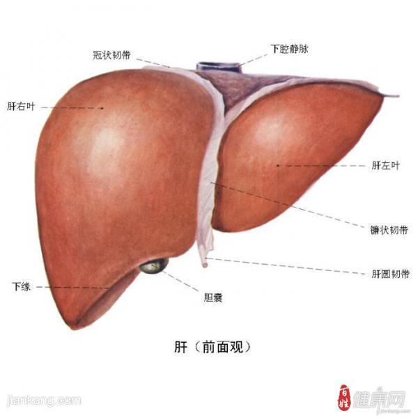 甲肝有什么症状表现呢