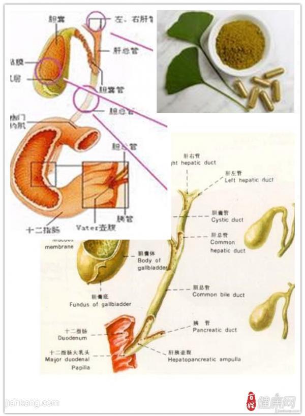 胆囊息肉的预防方法有哪些