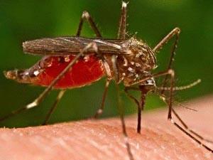 疟疾如何诊断