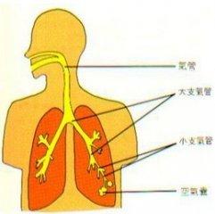 小儿哮喘食疗方法