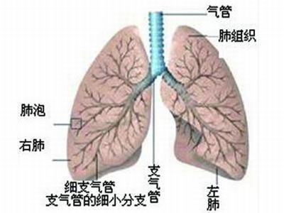 导致肺炎的原因是什么呢