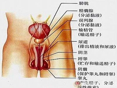 非淋菌性尿道炎体征表现有哪些