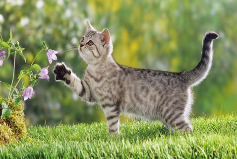 猫白血病症状有哪些