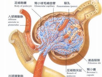 治疗肾囊肿的案例