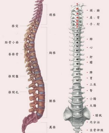 脊髓型颈椎病有什么危害