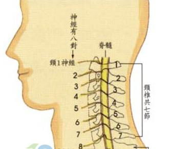 脊髓型颈椎病是怎么发生的?
