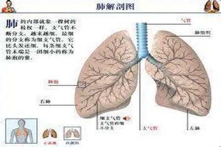 早起肺癌症状
