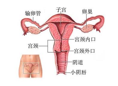 介绍女性输卵管粘连的原因