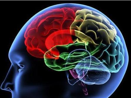 脑胶质瘤的食疗方都有哪些