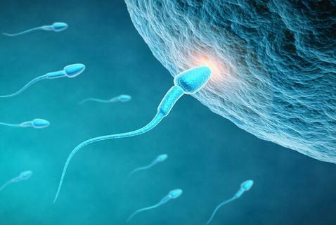 男性不育的病发因素介绍