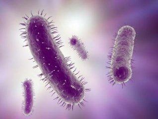 菌血症的原因有哪些呢