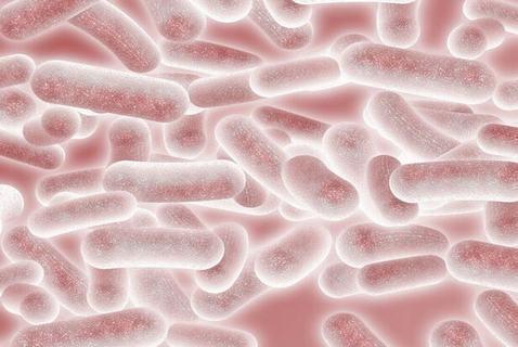 髋关节结核病的病因是什么