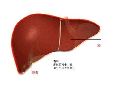 肝炎的早期症状有什么表现