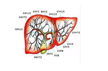 肝炎的早期症状表现是什么